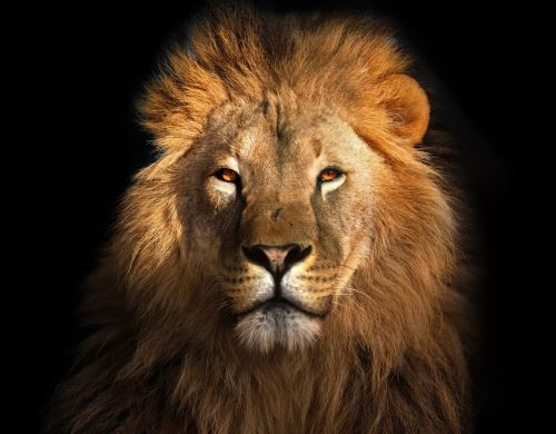 02 - Lví král