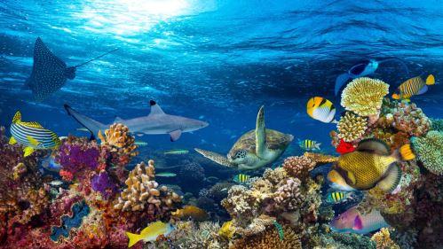 03 - Podvodní korálový útes