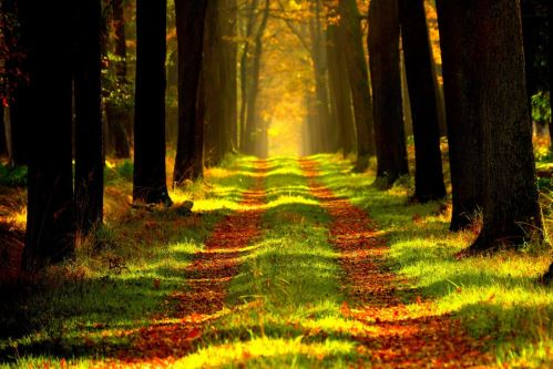 003 - Lesní cesta