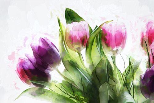 002 - Tulipány