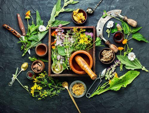 07 - Čerstvé bylinky a přídoní medicína